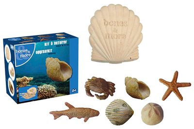 Dig it Out: Mini Sea-Life Fossil